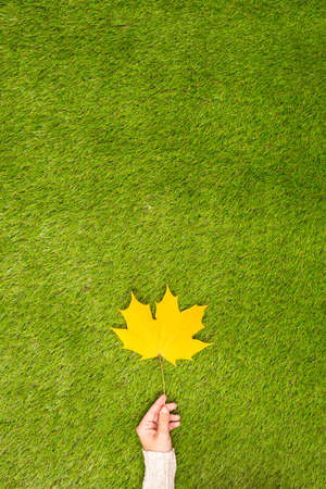 Top view woman hand with yellow maple leaf on the green grass. Creative and minimalism. Season change, autumn is coming. Vertical ratio. Concept