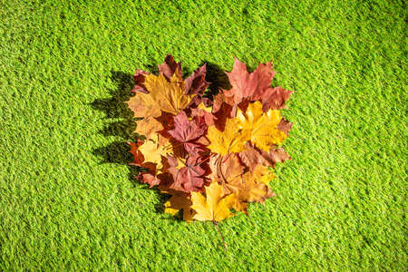 Top view of bouquet of colorful maple leaf in form of heart on the green grass. Creative and minimalism. Season change, autumn is coming. Nature concept.