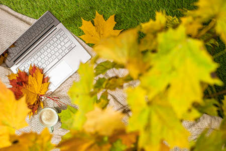 Autumn. Plaid, laptop, cup of coffee under branch of golden maple leaf on the green grass. Concept. Top view Stok Fotoğraf
