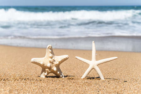 Two starfish tourists on sand beach with sea water background. Couple vacation concept