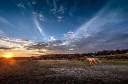 autumn horse: Horse walking into a magnificient sunset