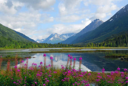 Picturesque view of Tern Lake on the Kenai penninsula with the Chugach mountains and forest in the background and wild flowers in the foreground with mountain reflections in the lake.