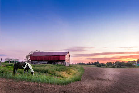 farm equipment: Horse grazing on a Mryland farm at sunset Stock Photo