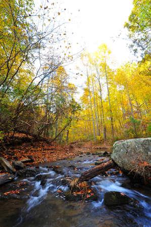 appalachian: Wild stream flowing through Appalachian mountains in Autumn Stock Photo