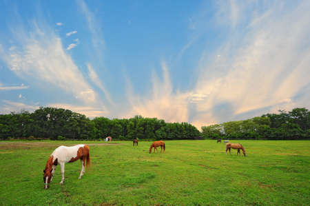 countryside landscape: Landscape of Horse stable in rural countryside of Maryland Stock Photo