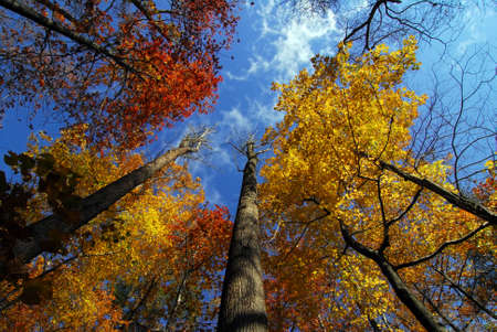 autumn trees: Autumn trees in Maryland