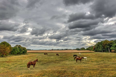 Horses quietly grazing in a field on a Maryland farm near sunset in Autumn