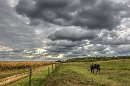 Horse quietly grazing in a field on a Maryland Farm at sunset in Autumn Stok Fotoğraf