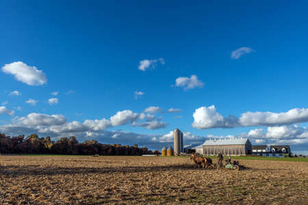 clydesdale: Belgian Draft horses pulling a plow on an Amish farm in Pennsylvania during Autumn near sunset Stock Photo