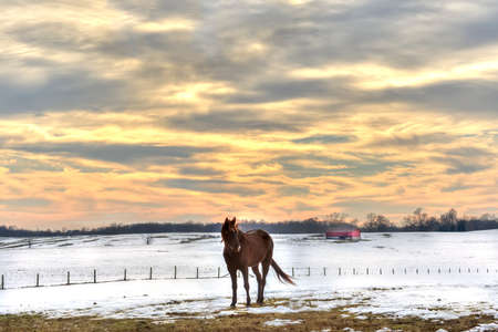 Horse standing in a field of snow on a Maryland farm in Winter Stok Fotoğraf