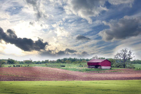 Springtime on a Maryland farm with cows, red barn and plowed field