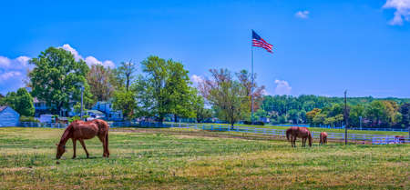 maryland flag: Horse stable in rural Maryland with horses grazing in a grassy field with an American flag flying in early Autumn