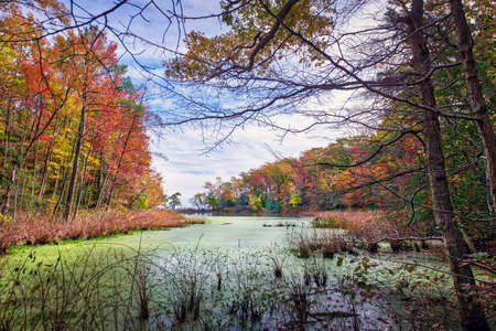 Autum view through the trees of a small lake near the Chesapeake Bay in Maryland wih fall leaves Stok Fotoğraf - 89543738