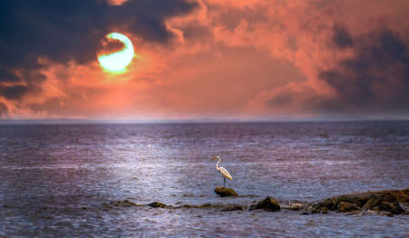 Great Egret standing on a rock in the Chesapeake Bay with the sun setting in the background Stok Fotoğraf - 93334791