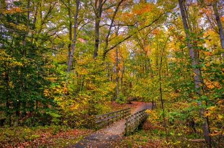Old wooden walking bridge across a small stream in a Maryland forest during Autumn with Fall leaves on the ground Stok Fotoğraf
