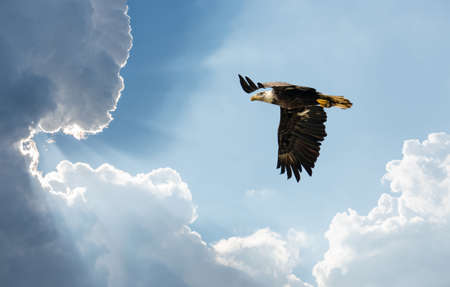Bald Eagle soaring in the clouds towards sun rays