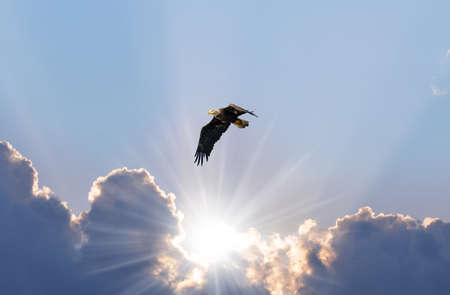 Majestic Bald Eagle Flying over sunbeams coming through the clouds