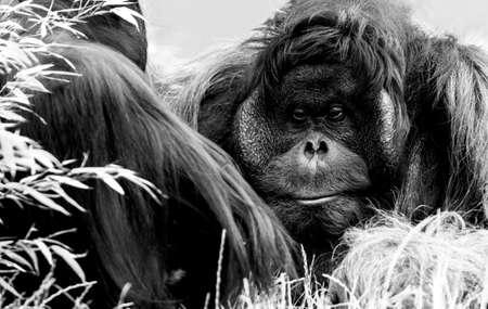 Orang Utan and his friend, Zoo Vienna