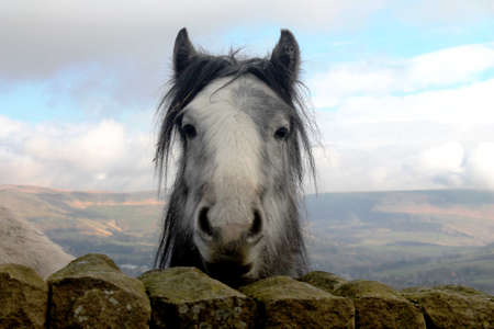 looking directly at camera: Curious horse looking directly at camera