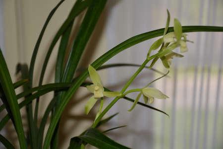 bluegrass: Orchid