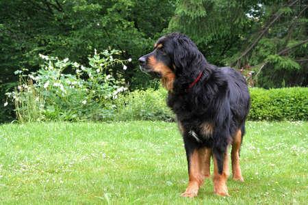 Black dog close up.