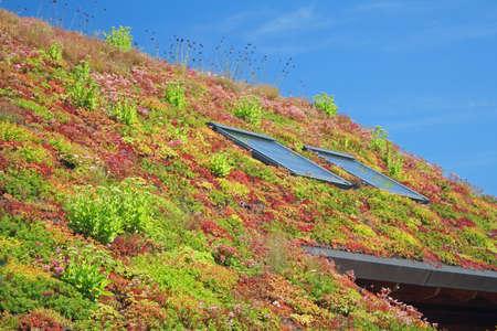 Vue de dessus de toit verdoyant.