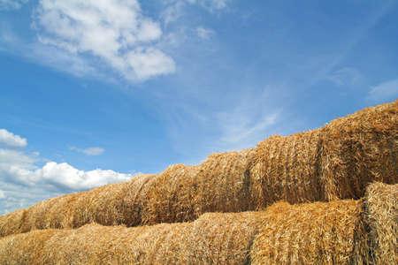 Time for harvesting