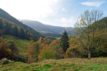 Southern Black Forest