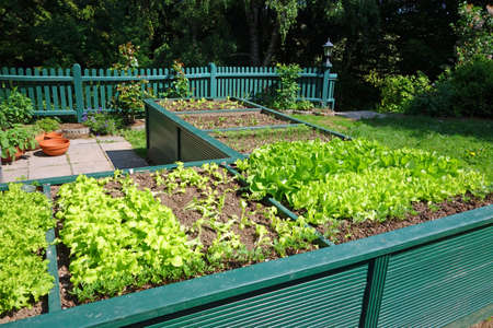 raised bed in a garden