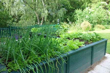 Raised bed in the garden