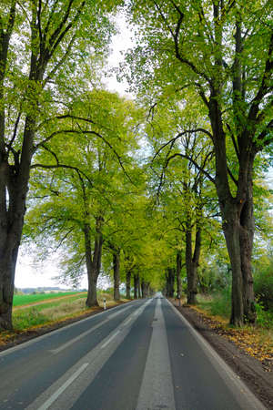 Country road with avenue of trees in autumn Imagens