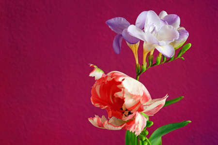 Tulip and frieze against a red background
