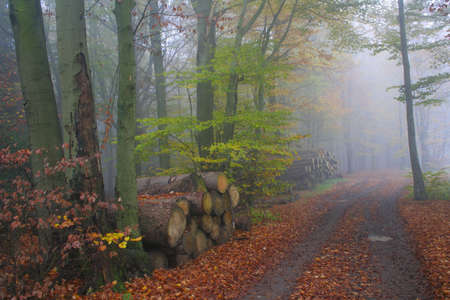 Autumn in the forest Imagens