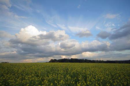 Cumulus clouds Imagens