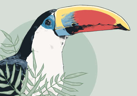 Coloured and detailed toucan illustration wallpaper.