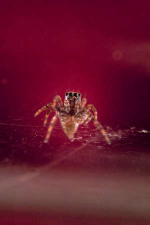 Macro close up of a jumping spider Stock Photo