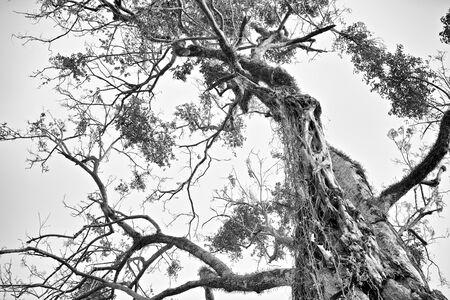 Scary tree at halloween photo