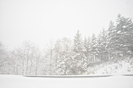 snow covered pine tree forest near the road during snow storm photo