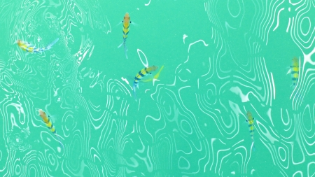 top view of colorful fish in the light green water ripple photo