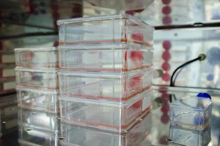 celula animal: cultivo de c�lulas animales Foto de archivo