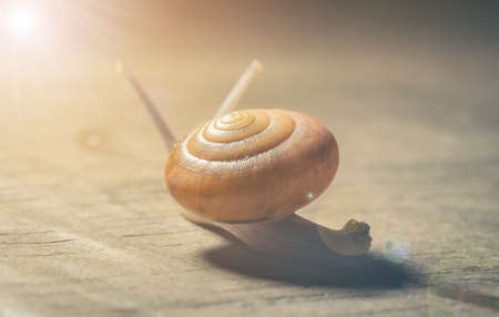 The snail is moving slowly towards the destination.