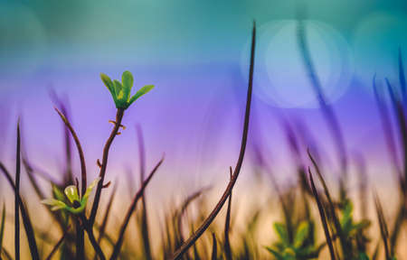 Grass flowers are in the city with light colored night glares that are blurred background.Soft Focus Image. Foto de archivo