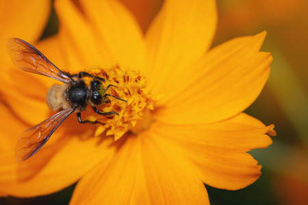 The insects are flying to the pollen naturally for living.