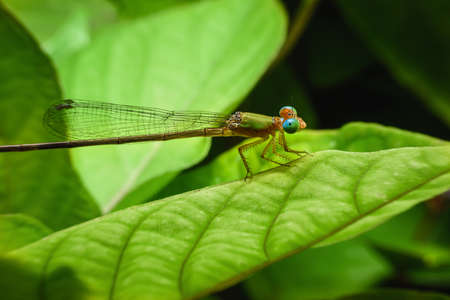 Beautiful dragonflies are attached to the green leaves in the natural garden.