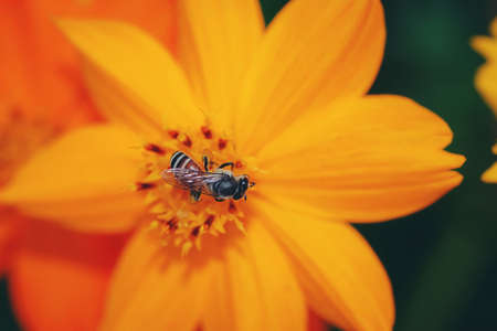 The insects are flying to the pollen naturally for living. Imagens