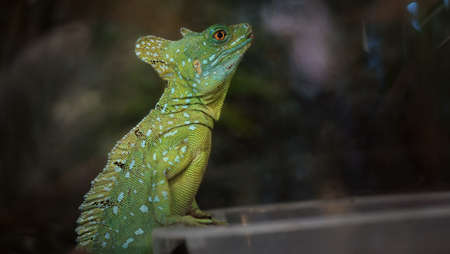 The little dragon is a pet that looks naturally beautiful.