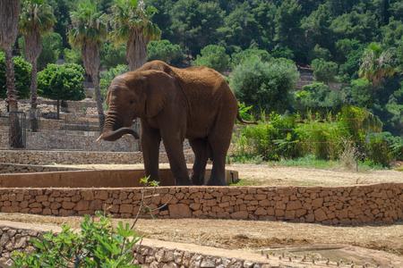 Gray Elephant in Fasano zoo Safari park in Italia