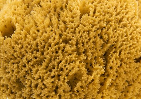 high def: Natural sea sponge high def picture Stock Photo