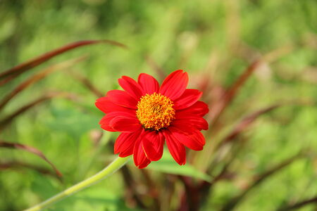 florid: Zinnia flower Stock Photo