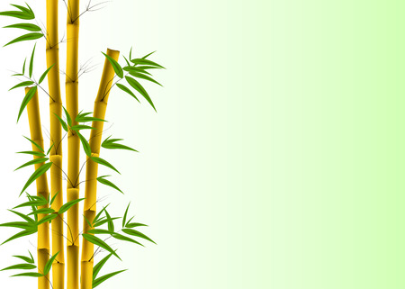 bole: Vector illustration of Bamboo, Nature background with copyspace Illustration